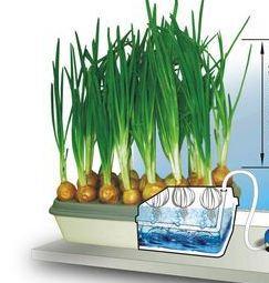 Домашняя гидропонная установка луковое счастье