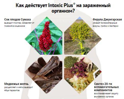 Средство от паразитов Intoxic Plus обзор