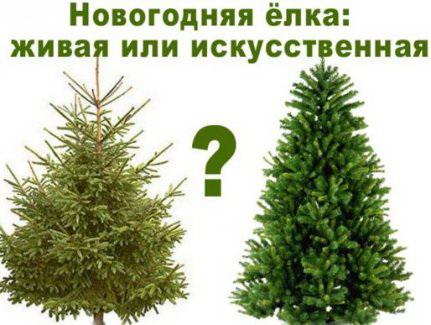 Новогодня елка живая или искусственная