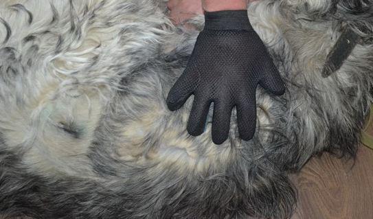 Перчатка вычесывание шерсти собаки