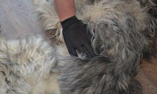 Удаление шерсти с собаки