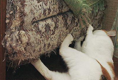 Кот точит когти об диван